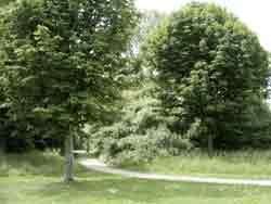 bomen03