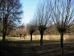 hollandsebiesbosch2