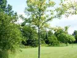 bomen01