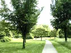 bomen05