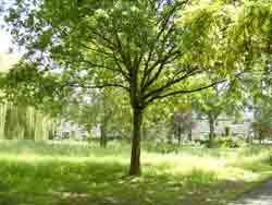 bomen08