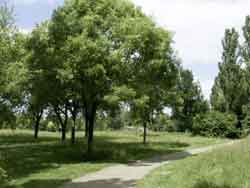 bomen09