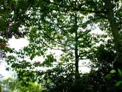 bomen11