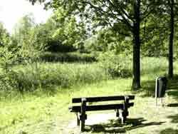 Voorjaarwandeling in het gorzenpark natuurvereniging ijsselmonde - Riet voor struik ...
