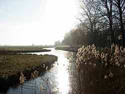 hollandsebiesbosch1