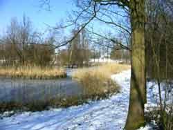 Winterwandeling in het gorzenpark natuurvereniging ijsselmonde - Riet voor struik ...